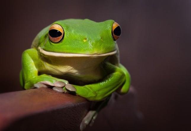 1001 thắc mắc: Loài động vật nào có thể nhịn ăn tới 30 năm? ảnh 5