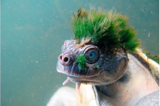 1001 thắc mắc: Những loài động vật nào 'hiếm có, khó tìm' trên trái đất? ảnh 1