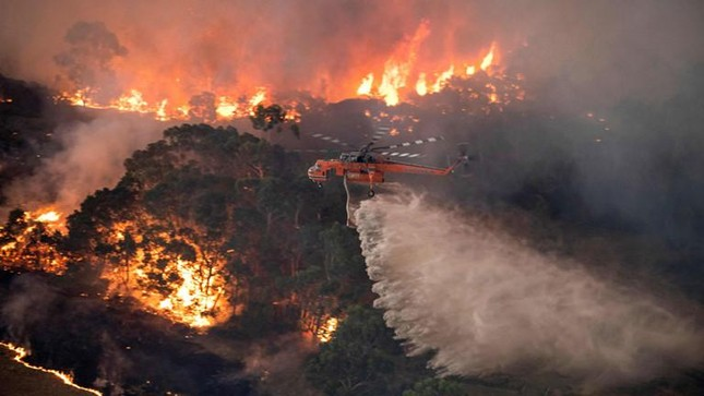 Thảm họa cháy rừng khủng khiếp ở Úc năm 2019 đã giết chết tổng số 30% loại động vật nào?
