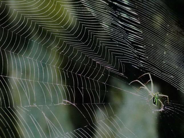 1001 thắc mắc: Máu của nhện có màu xanh? ảnh 1