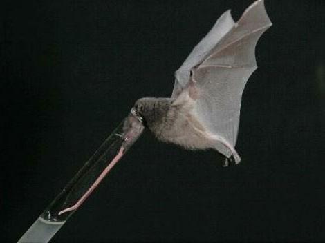 1001 thắc mắc: Động vật có chiếc lưỡi dài kỳ quái nhất hành tinh? ảnh 1
