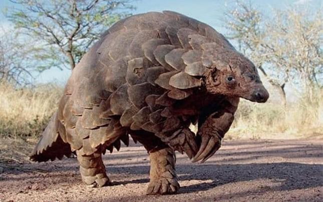 1001 thắc mắc: Động vật có chiếc lưỡi dài kỳ quái nhất hành tinh? ảnh 2