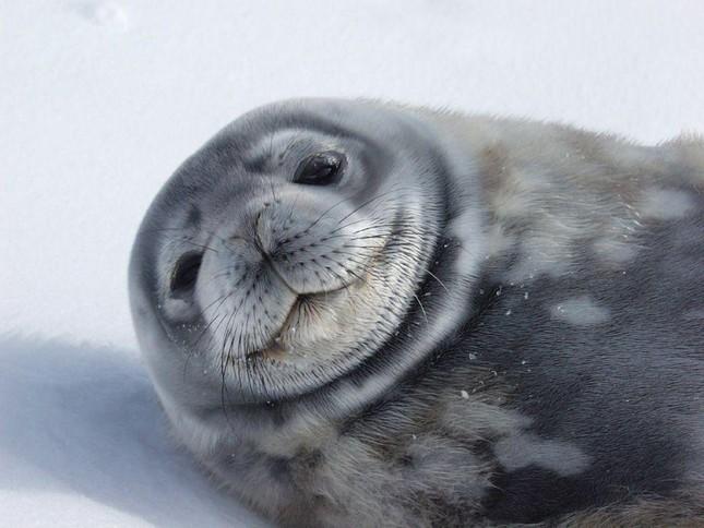1001 thắc mắc: Loài động vật nào chống chọi được nhiệt độ lạnh tới -150°C? ảnh 5