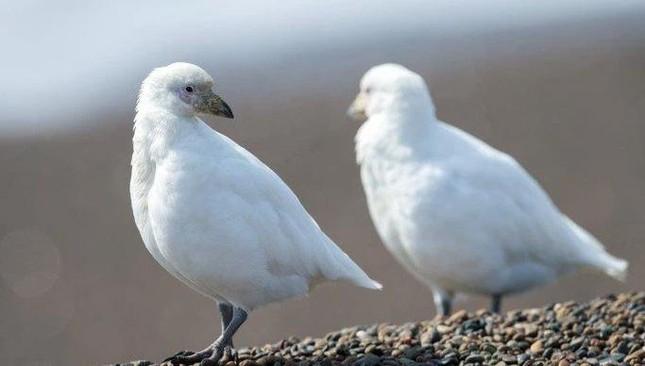 1001 thắc mắc: Loài động vật nào chống chọi được nhiệt độ lạnh tới -150°C? ảnh 4