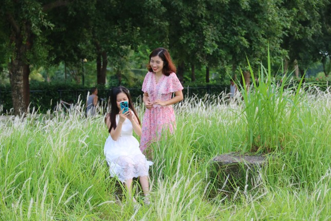 Những triền đê phủ trắng cỏ tranh ở Hà Nội ảnh 6
