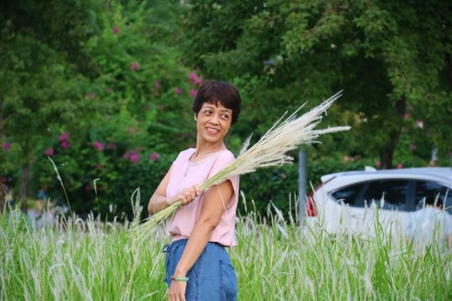 Những triền đê phủ trắng cỏ tranh ở Hà Nội ảnh 8