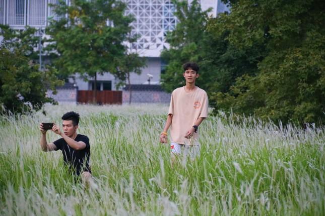 Những triền đê phủ trắng cỏ tranh ở Hà Nội ảnh 9