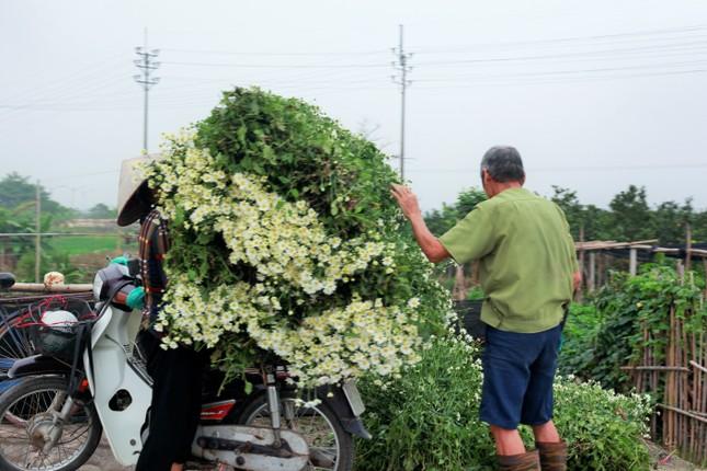 Làng Tây Tựu bận rộn, giá hoa tăng cao cận ngày 20/11 ảnh 2