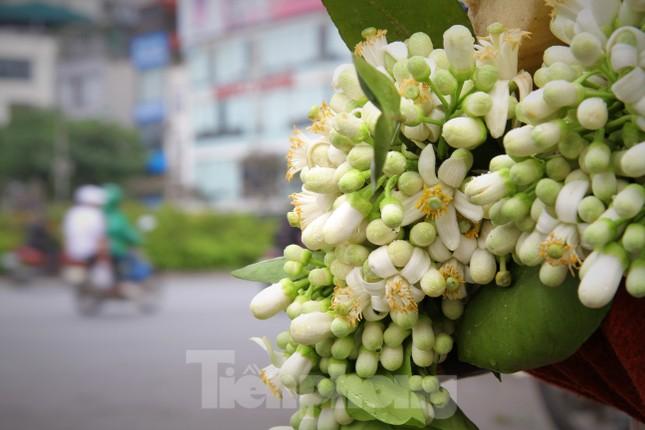 Hà Nội mùa hoa bưởi ngát hương ảnh 17