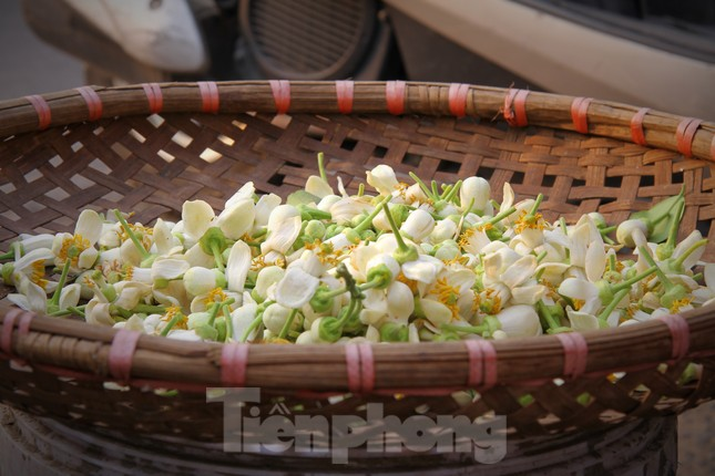 Hà Nội mùa hoa bưởi ngát hương ảnh 11