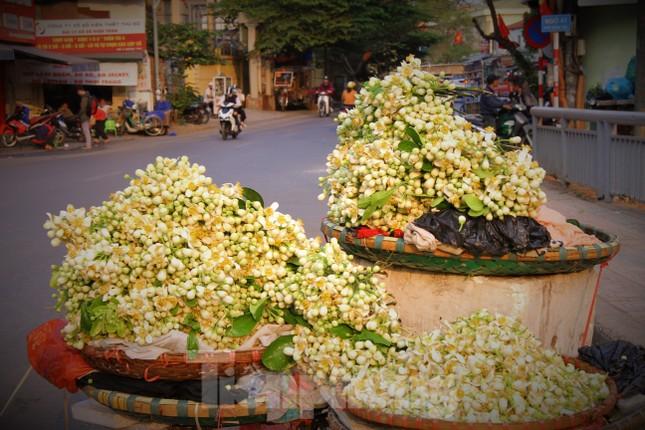 Hà Nội mùa hoa bưởi ngát hương ảnh 16