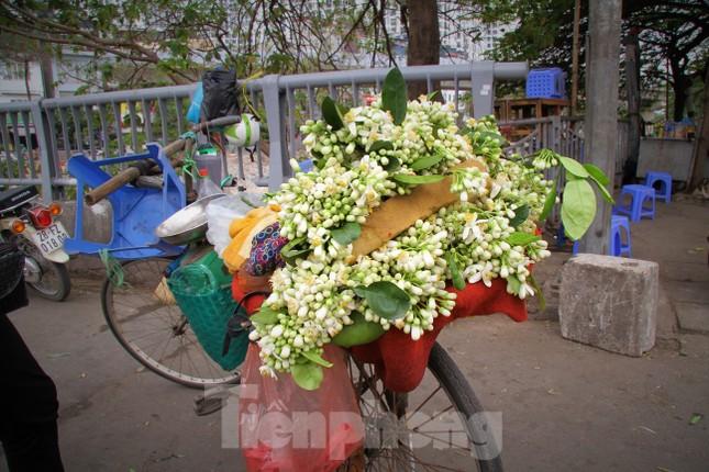 Hà Nội mùa hoa bưởi ngát hương ảnh 3