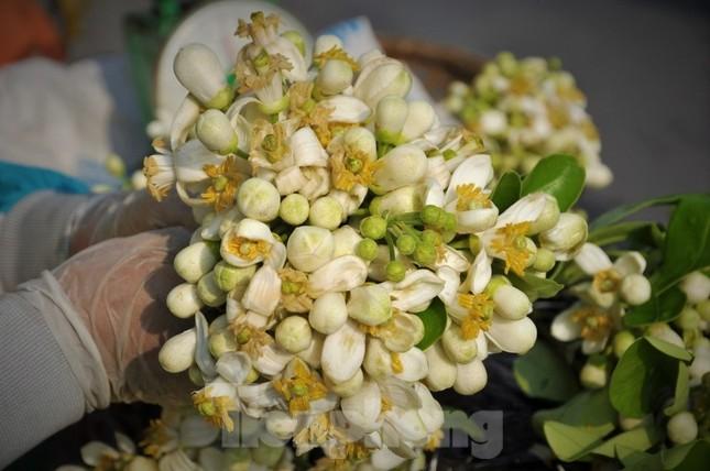 Hà Nội mùa hoa bưởi ngát hương ảnh 4