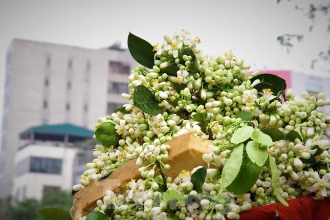 Hà Nội mùa hoa bưởi ngát hương ảnh 1