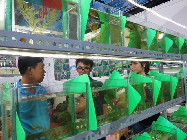 Dân chơi cá cảnh tròn mắt với cá 'xăm mình' 800.000 đồng/con ảnh 2