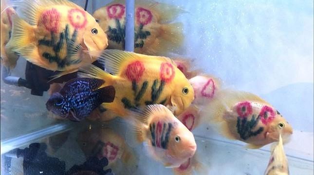 Dân chơi cá cảnh tròn mắt với cá 'xăm mình' 800.000 đồng/con ảnh 3