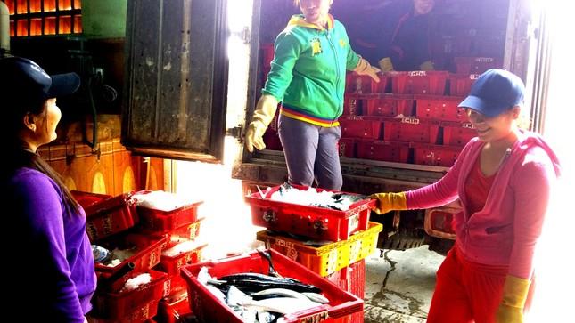 Huế tấp nập điểm bán hải sản sạch, sôi động cảng cá ảnh 1