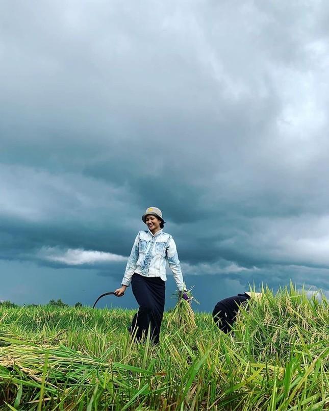 H'Hen Niê bình yên đi làm vườn, gặt lúa ở quê nhà sau hàng loạt tin đồn ảnh 1