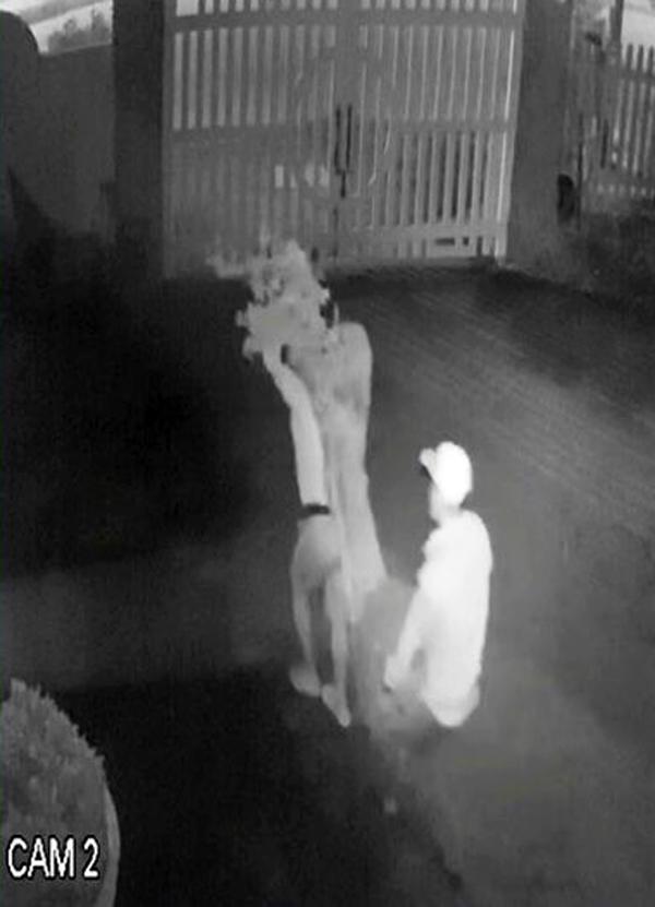 Đà Lạt: Truy tìm băng nhóm dùng ô tô trộm hoa giấy cổ thụ ảnh 3