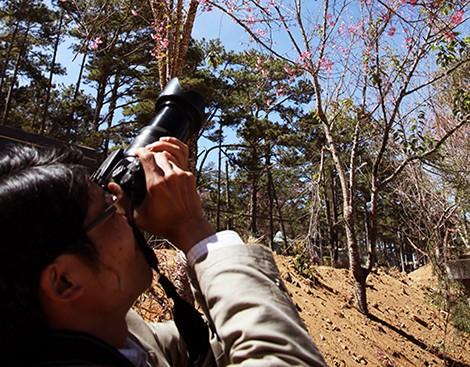 Lâm Đồng chờ hoa anh đào nở mới ấn định ngày khai hội ảnh 2