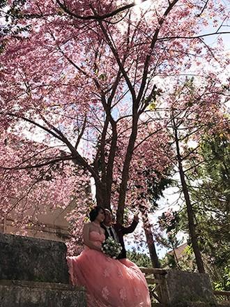 Chính thức công bố thời gian lễ hội hoa anh đào Đà Lạt ảnh 2