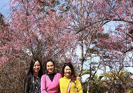 Ngây ngất ngắm hoa anh đào nhuộm hồng phố núi Đà Lạt ảnh 2