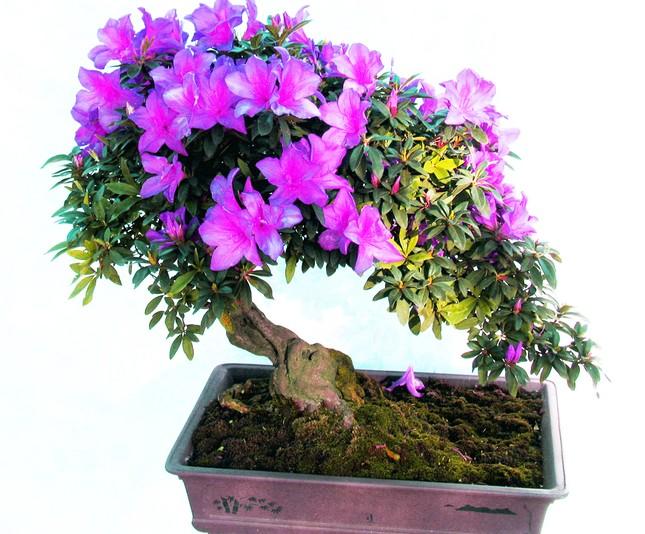 Nhiều loài hoa dại thành bon sai trăm triệu ở Đà Lạt ảnh 2