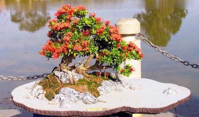 Nhiều loài hoa dại thành bon sai trăm triệu ở Đà Lạt ảnh 4