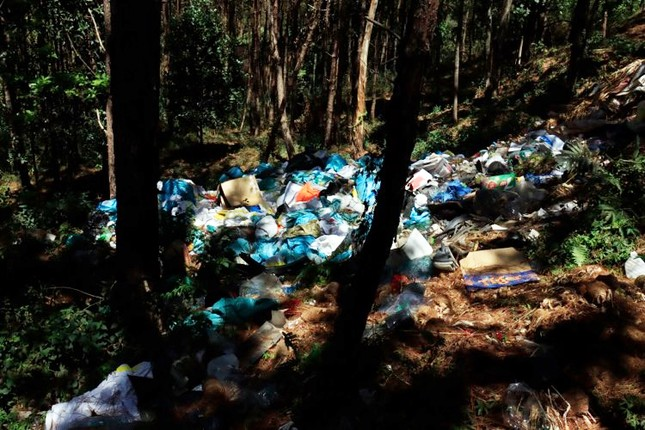Ùn ùn tuồn rác thải vào rừng thông Đà Lạt ảnh 2