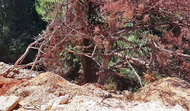 Ùn ùn tuồn rác thải vào rừng thông Đà Lạt ảnh 4