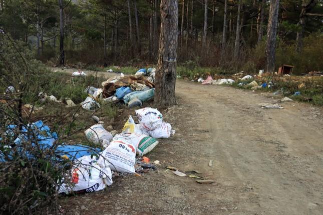 Ùn ùn tuồn rác thải vào rừng thông Đà Lạt ảnh 5
