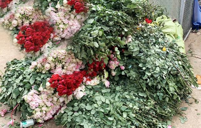 Hoa hồng đẹp nức tiếng Đà Lạt bị đốt, đổ bỏ khắp nơi ảnh 1