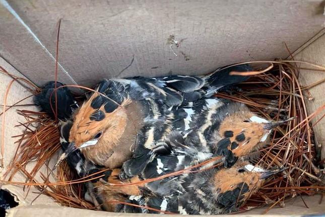 Bắn cặp chim đầu rìu tuyệt đẹp, cư dân mạng lên án báo công an ảnh 4