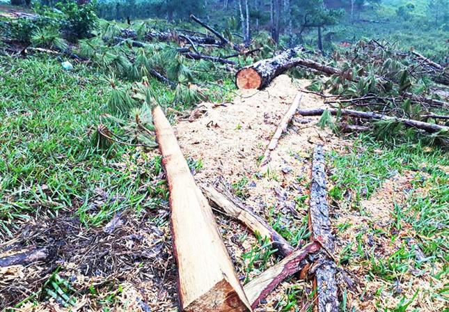 Truy tìm thủ phạm phá rừng khu dự trữ sinh quyển thế giới Lang Biang ảnh 1