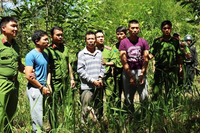 Đầu độc chết trắng 10 ha rừng thông, 7 bị cáo lãnh án ảnh 3