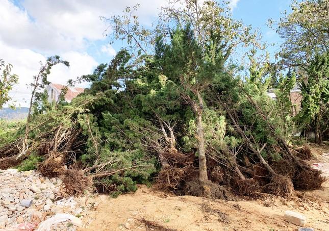 Đà Lạt: Xử lý vụ lấn chiếm đất rừng gây xôn xao dư luận ảnh 1