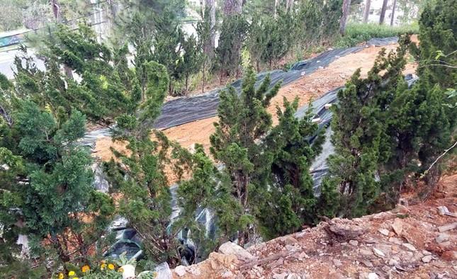 Đà Lạt: Xử lý vụ lấn chiếm đất rừng gây xôn xao dư luận ảnh 2