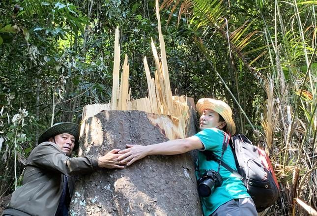 Rừng nguyên sinh bị tàn phá, gỗ lậu lọt vào nhà... Tổ trưởng bảo vệ rừng ảnh 2
