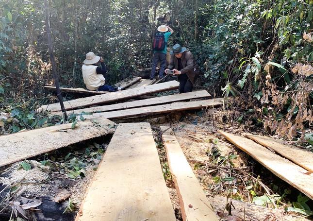 Rừng nguyên sinh bị tàn phá, gỗ lậu lọt vào nhà... Tổ trưởng bảo vệ rừng ảnh 3