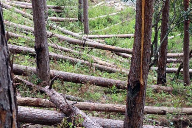 Bắt, triệu tập 8 đối tượng trong vụ tàn phá rừng phòng hộ ảnh 5