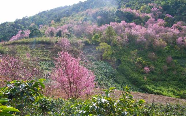 Tết Dương lịch đến Đà Lạt săn mây, ngắm hoa ảnh 1