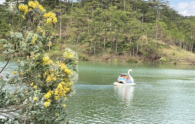 Tết Dương lịch đến Đà Lạt săn mây, ngắm hoa ảnh 2