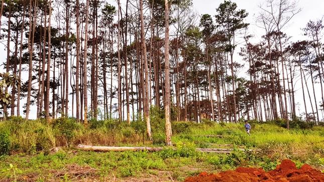 Lâm Đồng: Kỷ luật 125 trường hợp, quy trách nhiệm lãnh đạo để mất rừng ảnh 1