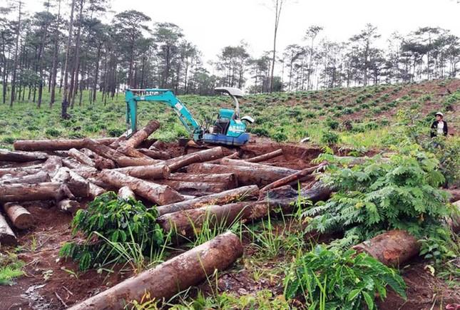 Lâm Đồng: Kỷ luật 125 trường hợp, quy trách nhiệm lãnh đạo để mất rừng ảnh 4