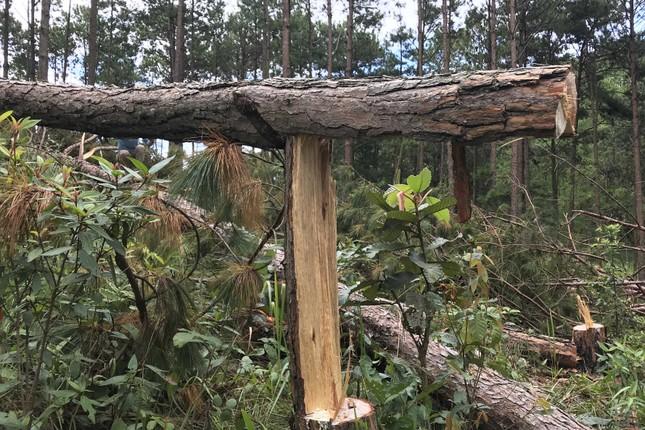 Lâm Đồng: Chấm dứt dự án sân golf theo kết luận của Thanh tra Chính phủ ảnh 1