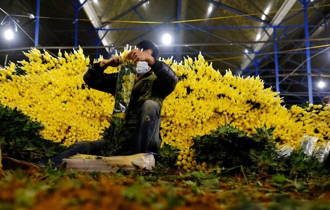 Đà Lạt: Trắng đêm thu hoạch hoa Tết chở về xuôi, công cắt hoa tăng gấp 3 lần ảnh 1