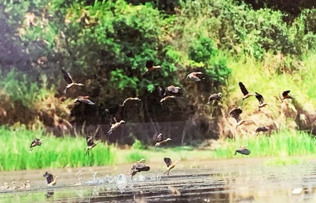 Lâm Đồng cho đấu giá thuê rừng để làm du lịch sinh thái ảnh 4