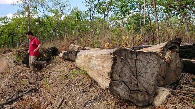 Hàng loạt cán bộ nhúng chàm vụ trùm gỗ lậu Phượng 'râu' ảnh 3