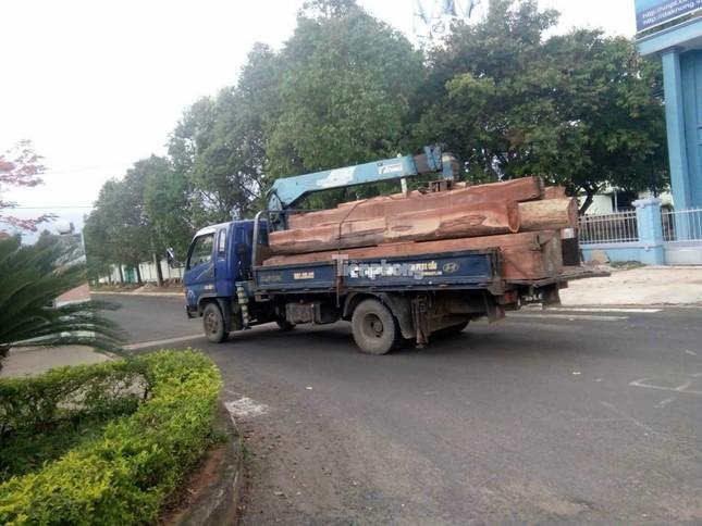 Hàng loạt cán bộ nhúng chàm vụ trùm gỗ lậu Phượng 'râu' ảnh 1