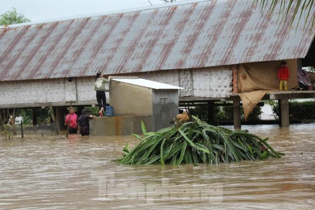 Hậu bão số 6: Người Đắk Lắk 'buốt ruột' khi tài sản, hoa màu mất trắng ảnh 10